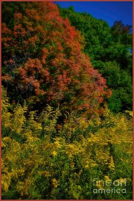A Summer Evening Photograph - Autumn Leaves And Wilflowers by Henry Kowalski