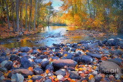 Photograph - Autumn Leaves At Ellis Creek by Tara Turner