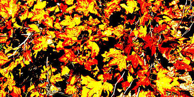 Red Leaf Digital Art - Autumn Leaves by Barbara Snyder