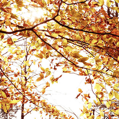 Photograph - Autumn Leaves by Blink Images