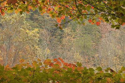 Photograph - Autumn Leaves by Byron Jorjorian