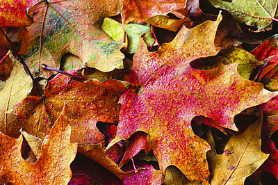 Photograph - Autumn Leaves by Christi Kraft