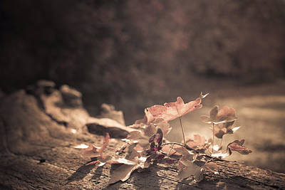 Diffuse Photograph - Autumn Leaves by Amanda Elwell