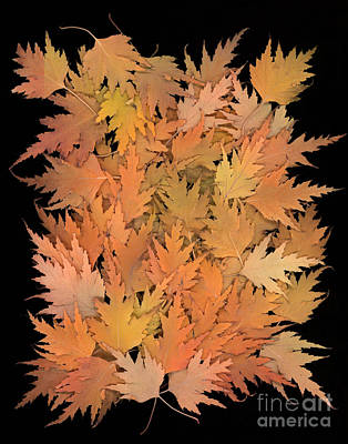 Photograph - Autumn Leaves by Cindy Singleton