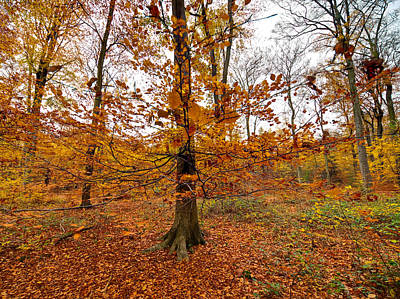 Photograph - Autumn Leaves Common Wood  by Gary Eason