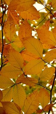 Photograph - Autumn Leaves by Corinne Rhode