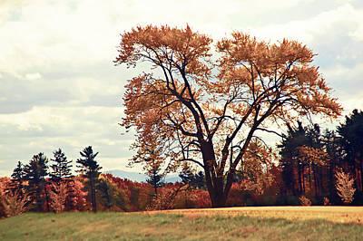 Photograph - Autumn Leaves by Craig Thomas