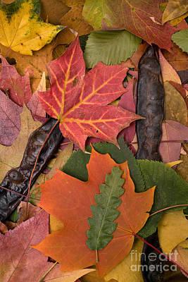 Photograph - Autumn Leaves by David Grossman