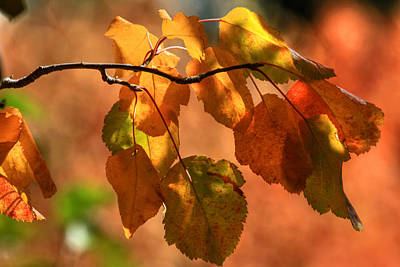 Photograph - Autumn Leaves by Donna Kennedy