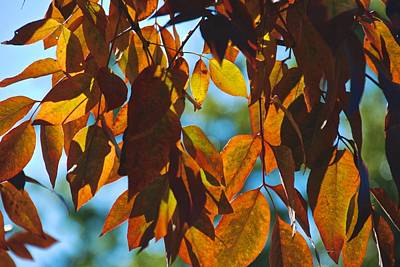 Photograph - Autumn Leaves by Eric Tressler