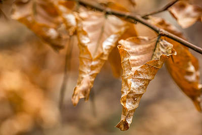 Photograph - Autumn Leaves by Gary Gillette