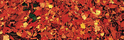 Autumn Leaves Great Smoky Mountains Art Print by Panoramic Images