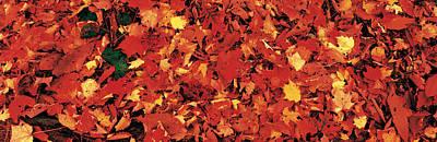 Autumn Leaves Great Smoky Mountains Art Print