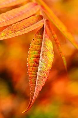 Autumn Leaves Art Print by Gynt