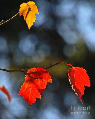 Photograph - Autumn Leaves I by Chuck Flewelling