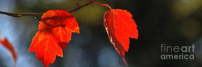 Photograph - Autumn Leaves I Panorama by Chuck Flewelling