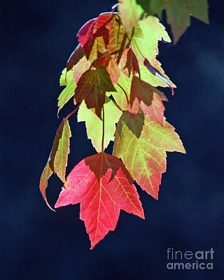 Photograph - Autumn Leaves II by Chuck Flewelling