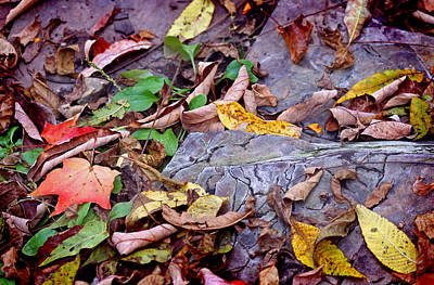 Photograph - Autumn Leaves In Creek Bed by Karen Adams