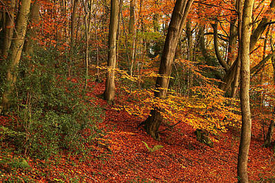 Photograph - Autumn Leaves In England by Sarah Broadmeadow-Thomas