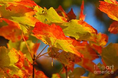 Photograph - Autumn Leaves In Maine by Amy Porter