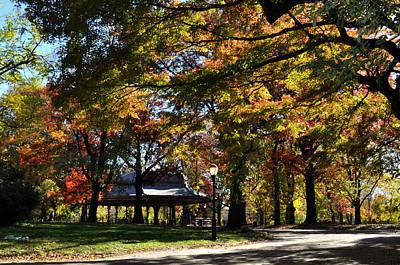 Autumn Leaves In Prospect Park Art Print