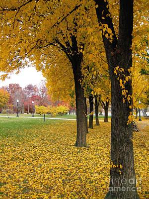 Photograph - Autumn Leaves In Washington Dc by Eva Kaufman