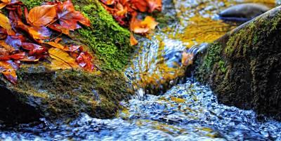 Autumn Leaves In Water Art Print