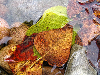 Giuseppe Cristiano - Autumn Leaves in Water by Jennie Marie Schell