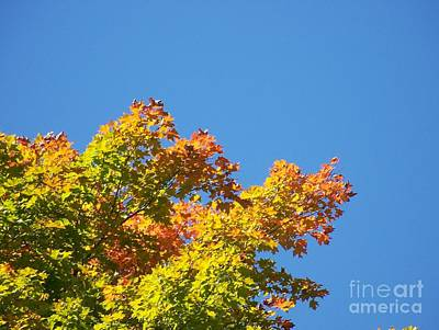 Photograph - Autumn Leaves by Jackie Mueller-Jones