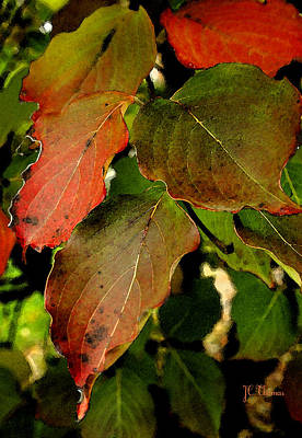 Photograph - Autumn Leaves by James C Thomas