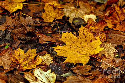 Photograph - Autumn Leaves by Jim Orr