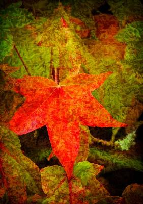 Photograph - Autumn Leaves by Jordan Blackstone
