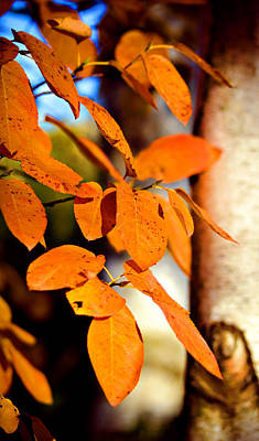 Photograph - Autumn Leaves by Julie Palencia