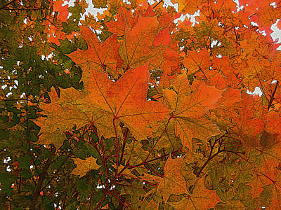 Photograph - Autumn Leaves by Kathy Bassett