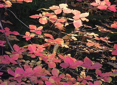Photograph - Autumn Leaves by Kristen R Kennedy