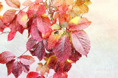 Purple Grapes Digital Art - Autumn Leaves by Liane Wright
