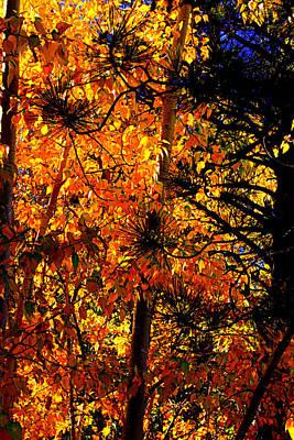 Carson Mansion Photograph - Autumn Leaves by Lynn Bawden