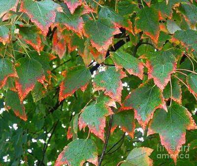 Autumn Leaves Art Print by Marcia Nichols