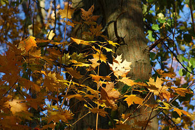 Photograph - Autumn Leaves by Margie Avellino