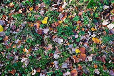 Photograph - Autumn Leaves by Marwan Khoury