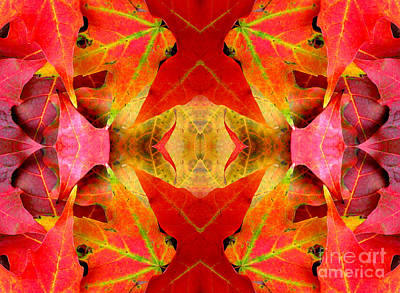 Photograph - Autumn Leaves Mirrored by Rose Santuci-Sofranko