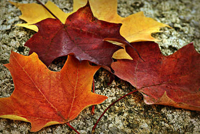 Photograph - Autumn Leaves by Nikolyn McDonald
