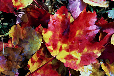 Photograph - Autumn Leaves Of Red And Gold by Allen Beatty