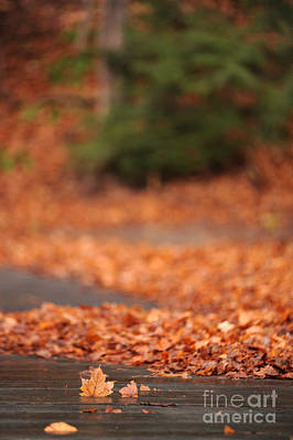 Autumn Leaf Photograph - Autumn Leaves On A Bridge by HD Connelly