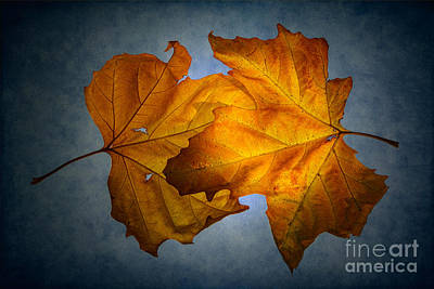 Autumn Leaves On Blue Art Print