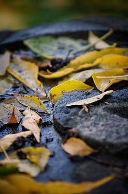 Photograph - Autumn Leaves On Stone by Chris Bordeleau
