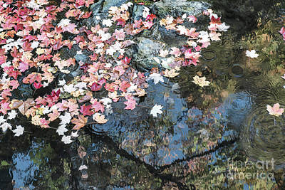 Autumn Leaves On Water Art Print