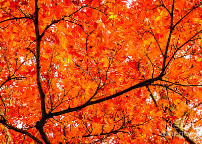 Photograph - Glorious Autumn Leaves by Peta Thames