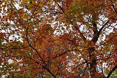 Landscape Photograph - Autumn Leaves by Photographic Arts And Design Studio