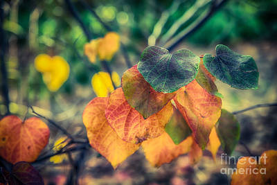 Photograph - Autumn Leaves by Ray Warren